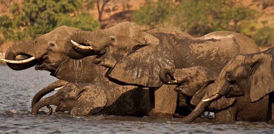 Amazing photo safari in Botswana