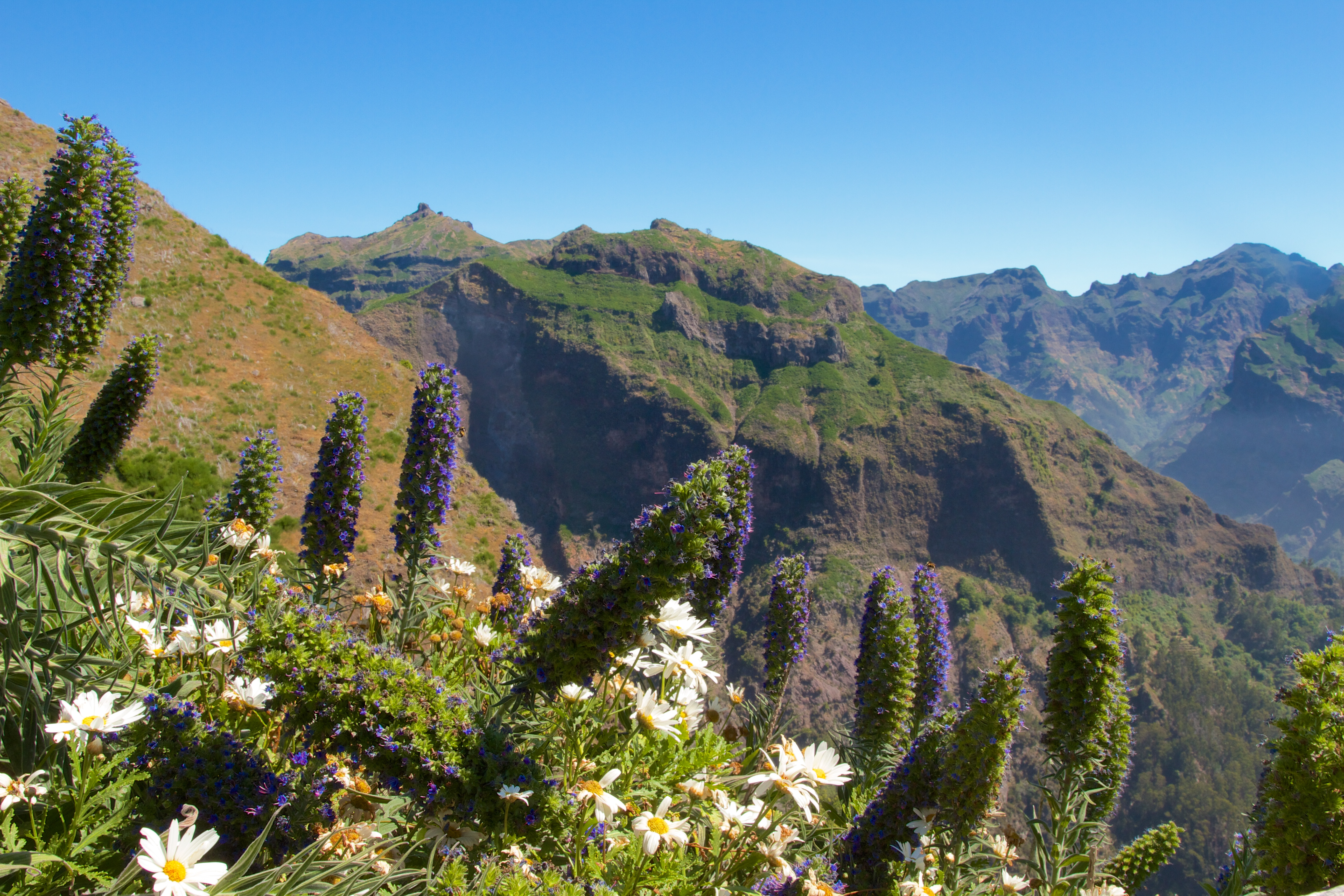 What to do in Madeira? Levada walks!