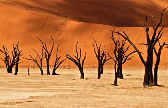 Discover beauty of desert and wildlife in Namibia!