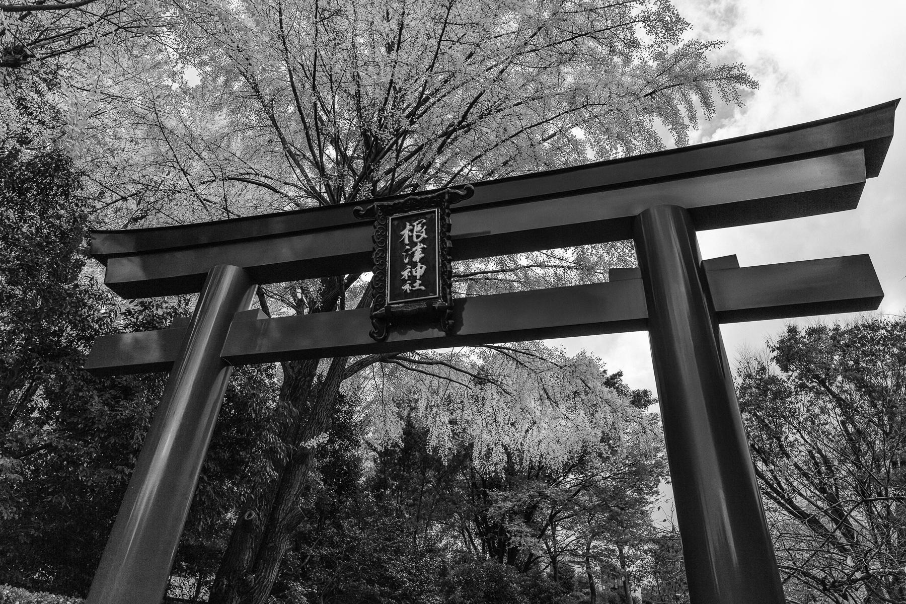 Torii at Nezu Shrine in Central Tokyo