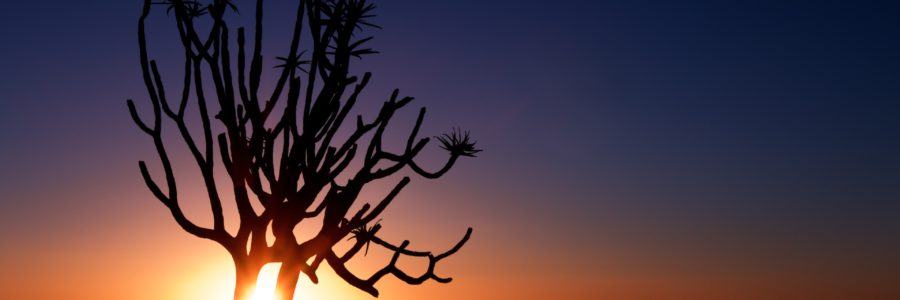 When Is the Best Time to Travel to Namibia?
